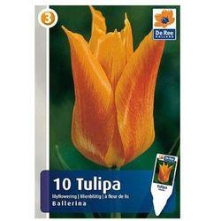 Tulipany Ballerina (8711148314059)