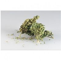 Sinsemilla CBD 10g - marihuana z kategorii Pozostałe delikatesy