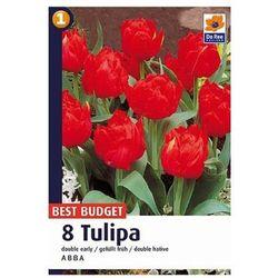 Tulipany Abba (8711148321224)