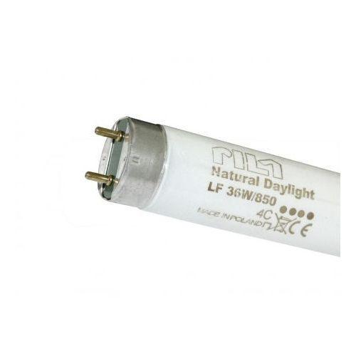 Świetlówka liniowa LF80 36W/850 T8 standart (A) dzienna G13 5000K 8727900015621 PILA Philips - produkt dostępny w Doktorvolt Hurtownia Elektryczna