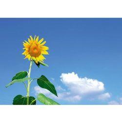 Tablica suchościeralna słonecznik 237 marki Wally - piękno dekoracji