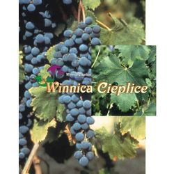 Sadzonka winorośli merlot marki Winnica cieplice