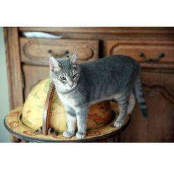 Fototapeta kot na globusie fp 2607 marki Deco-strefa – dekoracje w dobrym stylu
