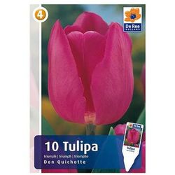Tulipany Don Quichotte (8711148319900)