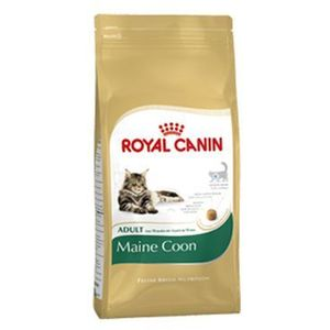 cat maine coon 10 kg marki Royal canin