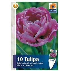 Tulipany Blue Diamond M
