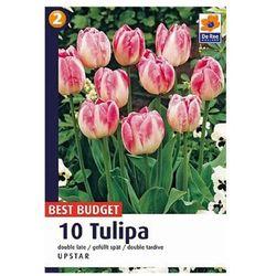 Tulipany Upstar (8711148316718)