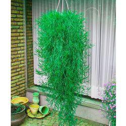 Starkl Bambus zwisający 1 szt