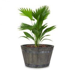 Blumfeldt Winegrow, pojemnik na rośliny, 52,5 x 31,5 cm (Ø x wys.), lekki, tworzywo Fibreclay, szary (4060656230301)