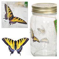 Motyl w słoiku - paź królowej - paź królowej marki Gadget master