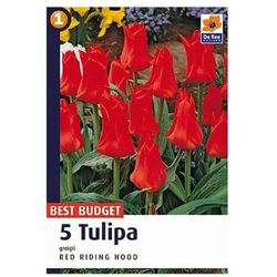 Tulipan Red Riding Hood (8711148318781)