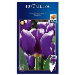 Tulipany Triumph (8711148300083)