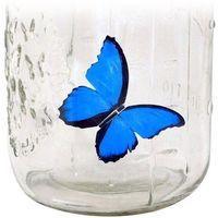 Gadget master Motyl w słoiku - błękitny morpho - błękitny morpho