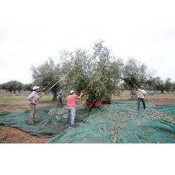 Ekskluzywna portugalska oliwa z oliwek  500ml, marki Angélica