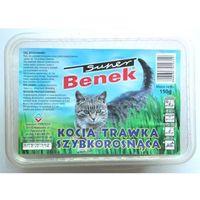trawka szybkorosnąca dla kota 150g w plastikowym pudełku marki Certech