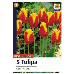 Tulipan Triumph Kees (8711148318804)