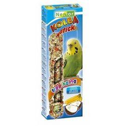 Nestor  kolba papuga mała owoce tropikalne i kokos