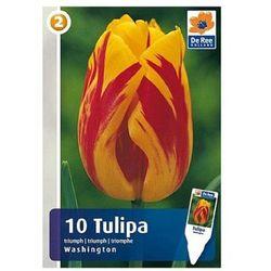 Tulipan Triumph (8711148313762)