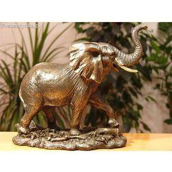 Słoń średni Veronese, kup u jednego z partnerów