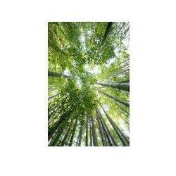 Las bambusowy - plakat marki Paper