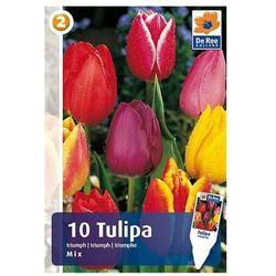 Tulipany Triumph (8711148313779)
