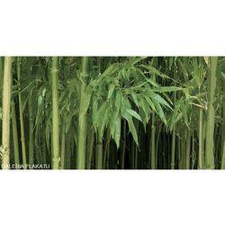 Las Bambusowy - reprodukcja (8714597323009)