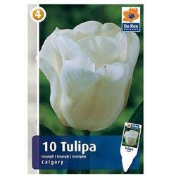 Tulipany Calgary, CJM759