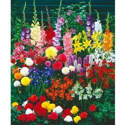 Rośliny cebulowe kwitnące w lecie 101 szt marki Starkl