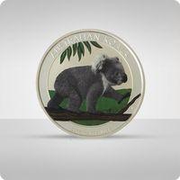 Australijska Koala 1 oz srebra - kolor