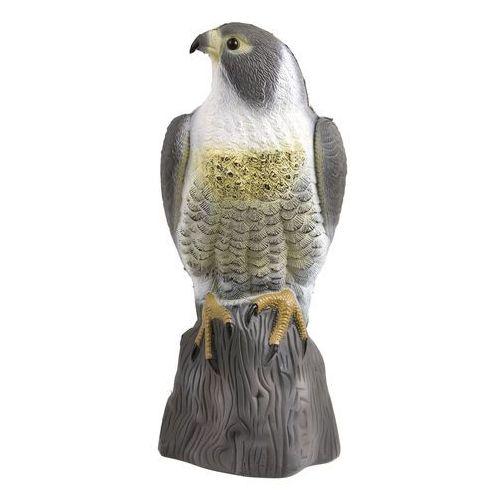 Sokół - wizualny odstraszacz ptaków z kategorii poza domem