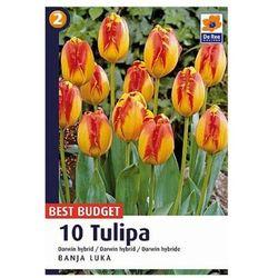 Tulipany Banja Luka, CJBB478