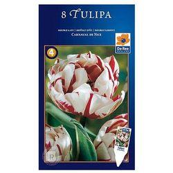 Tulipan Carnaval de Nice (8711148315964)