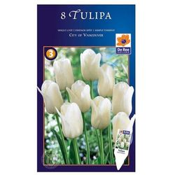 Tulipan City of Vancouver Triumph, CJSU065
