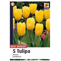 Tulipan Fosteriana (8711148318774)