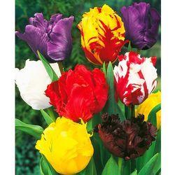 Starkl Tulipany papuzie - mix 25 szt