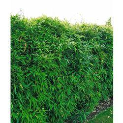 Płot bambusowy 1 szt marki Starkl