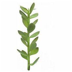 sadzonka drzewa money, sztuczna roślina, 30 cm marki Europalms