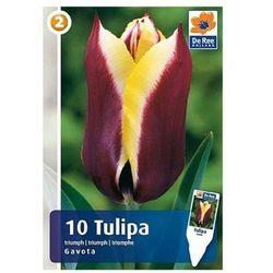 Tulipany Gavota M (8711148313694)