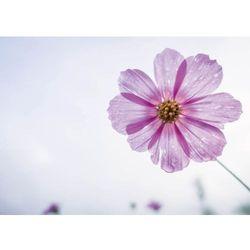 Wally - piękno dekoracji Tablica suchościeralna kwiatek 246
