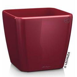 Donica Lechuza Quadro LS czerwona scarlet red, 3-16127