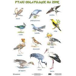 Plansza. Ptaki odlatujące na zimę. Ptaki pozostające na zimę - produkt dostępny w Smyk
