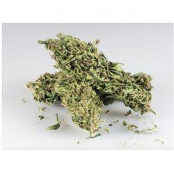 Sinsemilla CBD+ 10g - marihuana
