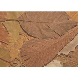 Wally - piękno dekoracji Tablica magnetyczna suchościeralna liście 160