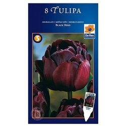 Tulipany Black Hero, CJSU011