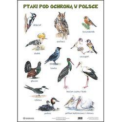 Plansza. Ssaki pod ochroną w Polsce. Ptaki pod ochroną w Polsce - produkt dostępny w Smyk
