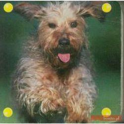 Mini kosteczka Pies (kategoria: Książki dla dzieci)