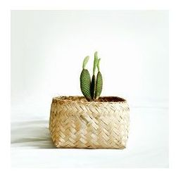 Bambusowy kosz - średni marki Import bali