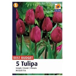Tulipan Triumph Negrita (8711148318811)