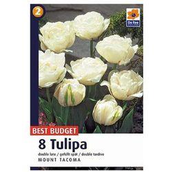 Tulipany Mount Tacoma, CJBB483