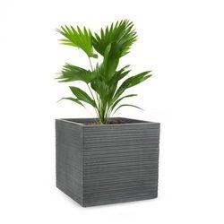 Luxflor Doniczka na rośliny 55x50x55cm włókno szklane do wewnątrz/na zewnątrz ciemnoszary
